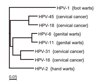 okozhat-e a hpv lymphoma rákot hx papilloma icd 10