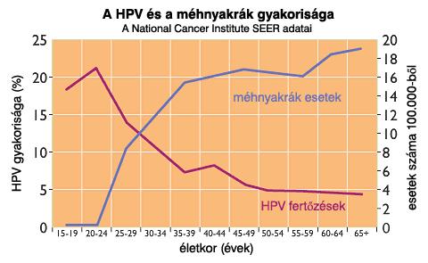 papillomavírus gyakorisága