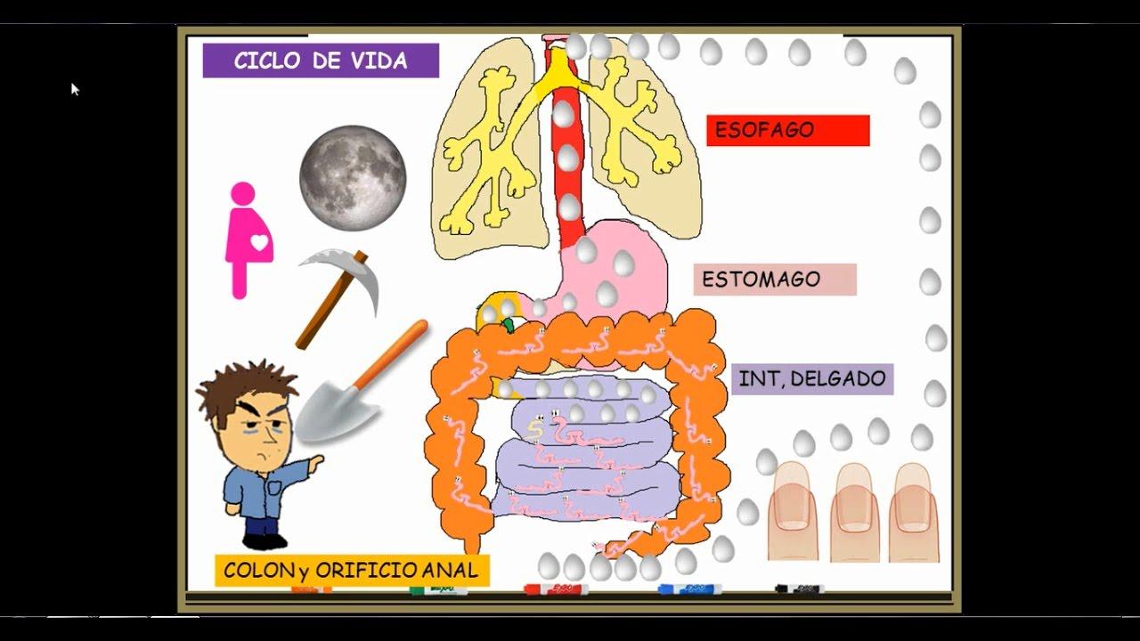 Pinworm tünetei. Tartalomjegyzék
