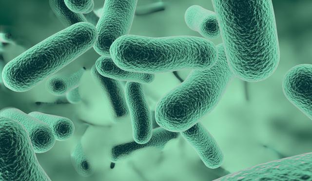 parazita kezelés gömbférgekkel