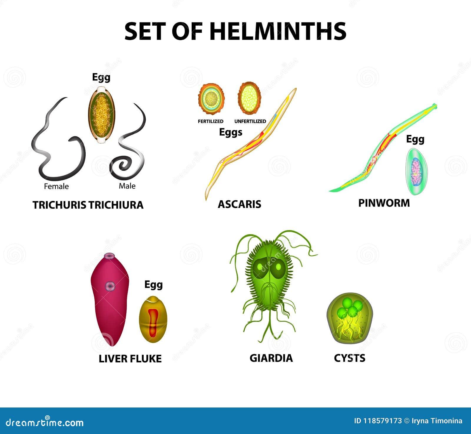 a helminthiasis fertőző vagy sem a férgeket jobban kezelik