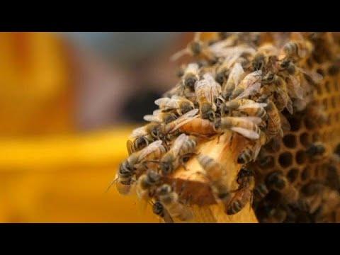 szemölcsök a méh tüneteiben nemi szemölcsök milyen gyógyszerek