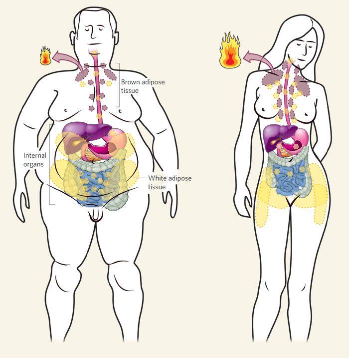 Hogyan lehet megszabadulni a szív parazitáitól. Barbara_Wood_-_Arnyak_a_hircityvideo.hu