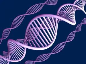 hpv és petefészekrák kockázata HPP-kezelés férfiaknál