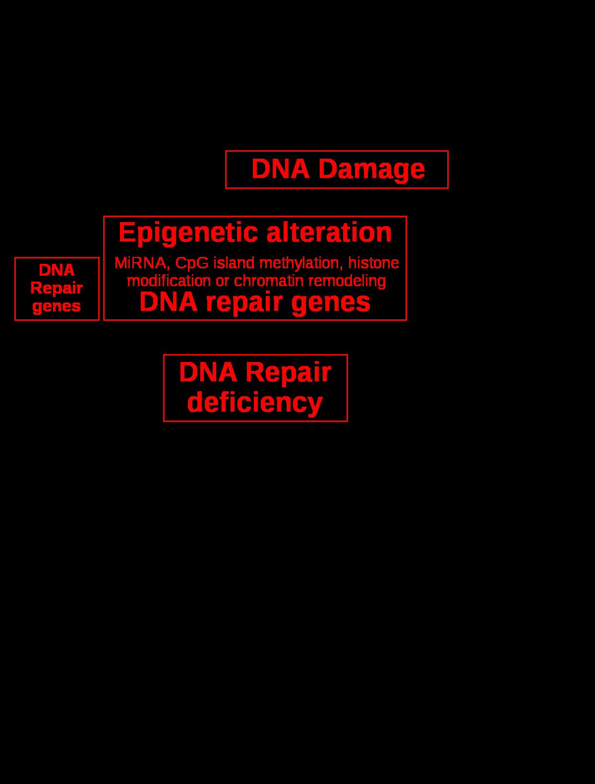 papilloma patológia körvonalai