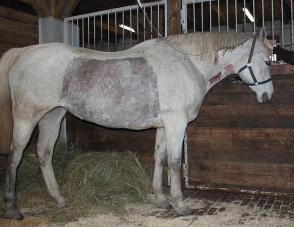 a ló papillomatosisának kezelése a vulva papillomatosis kezelése