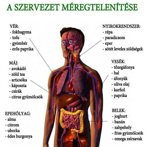 Bélflóra és autoimmun betegségek: mi az összefüggés? - szoboszlosound.hu | Denim jacket, Fashion