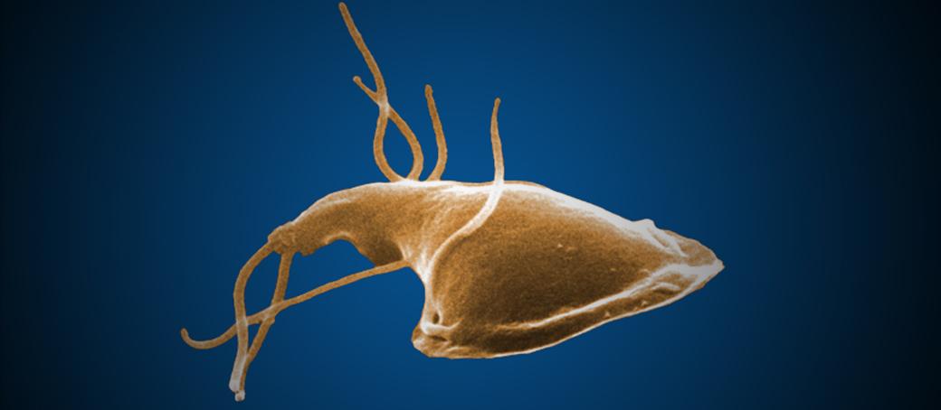 giardia ami okozza kötelező paraziták azt jelentik