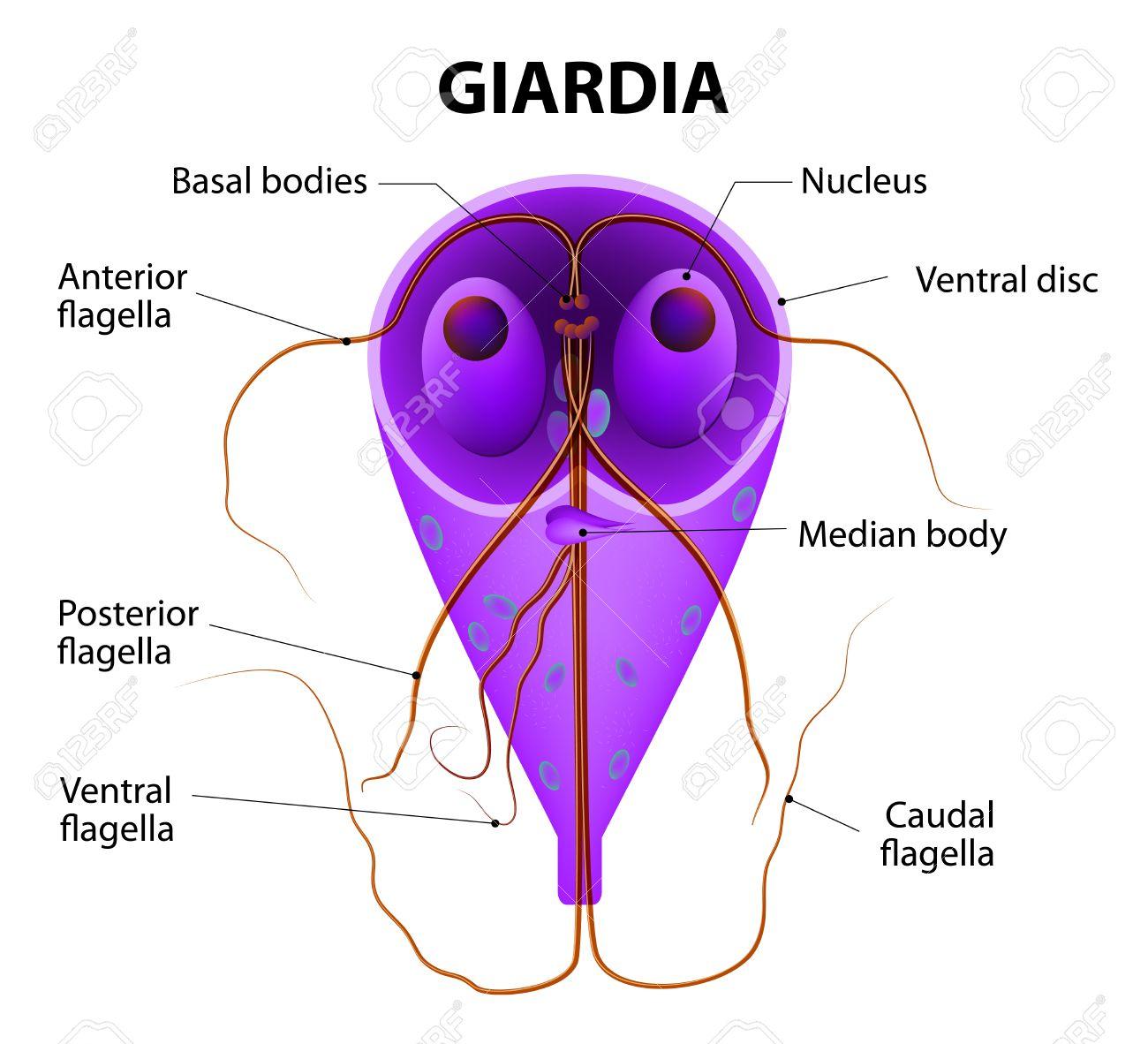 képek a giardia protozoákról rák és genetika