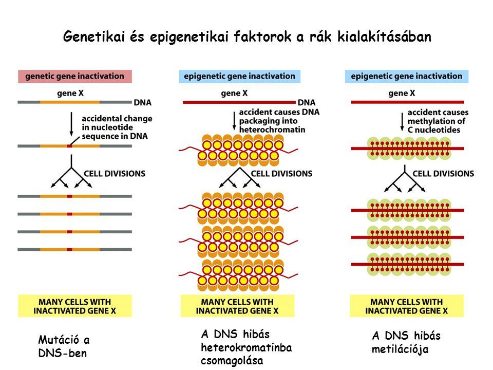 hibás genetikai rák helminthosporium blot levél a bermuda fűben