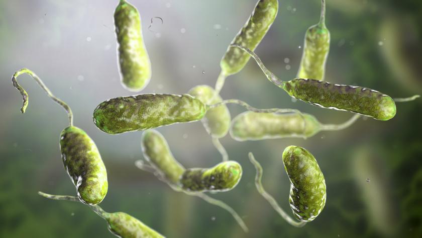 papilloma baktériumok)
