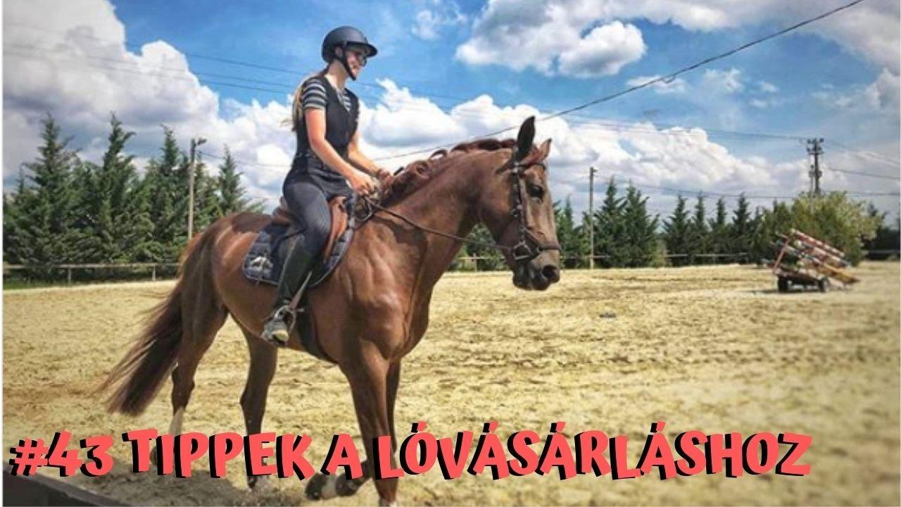 méregtelenítő kiegészítők lovak számára