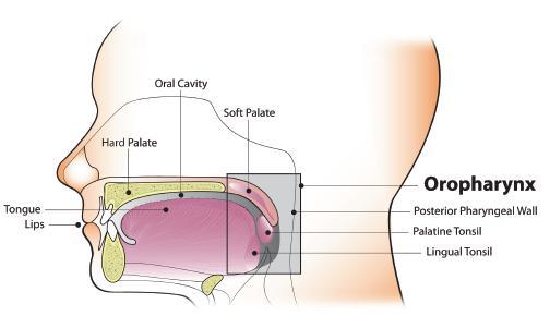 hpv 16 és oropharyngealis rák