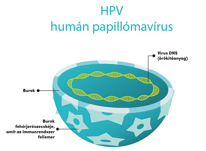 mit jelent a pozitív hpv vírus hpv durch warzen