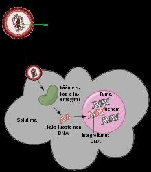 kezelés parazita viszketéssel a bőrön hpv vírus icd 10