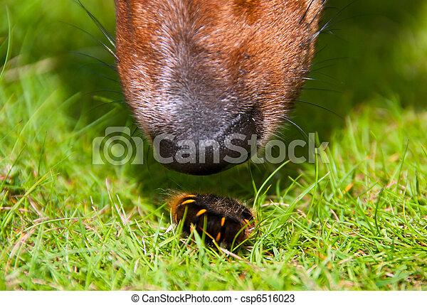 férgek kutyaképeken a prosztatarák tehetetlenné tesz