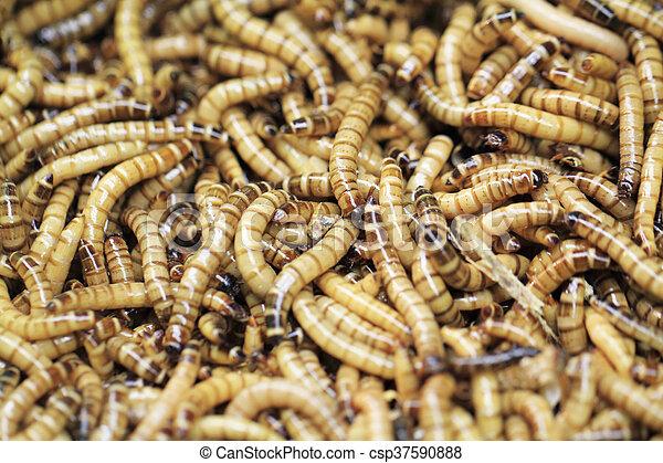 paraziták fonálférgekkel történő kezelése