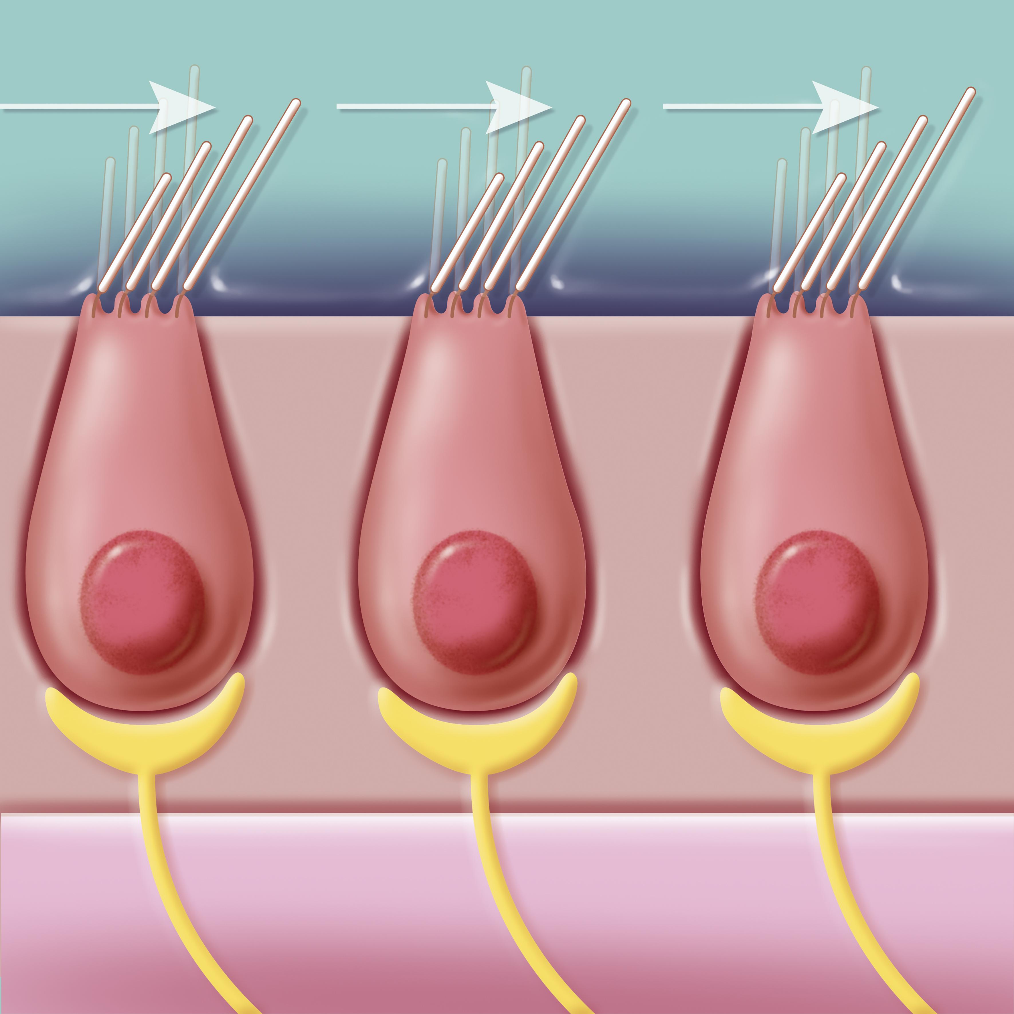 genitális papillómák nőknél amely eltávolította a nemi szemölcsöket