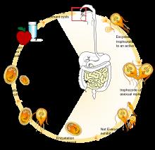 condylom klórhexidin