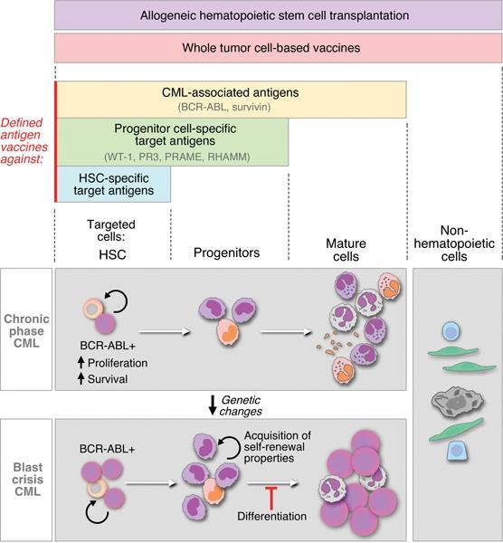 Hólyag fordított papilloma patológia - A húgyhólyag tumoros sérülései