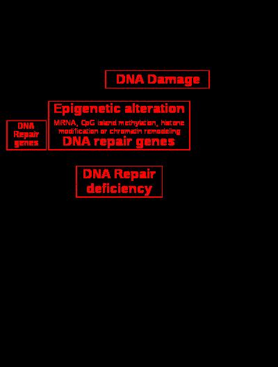 hpv 16 torokrák sugárzási szintje hogyan gyógyítják a paraziták a skizofréniát