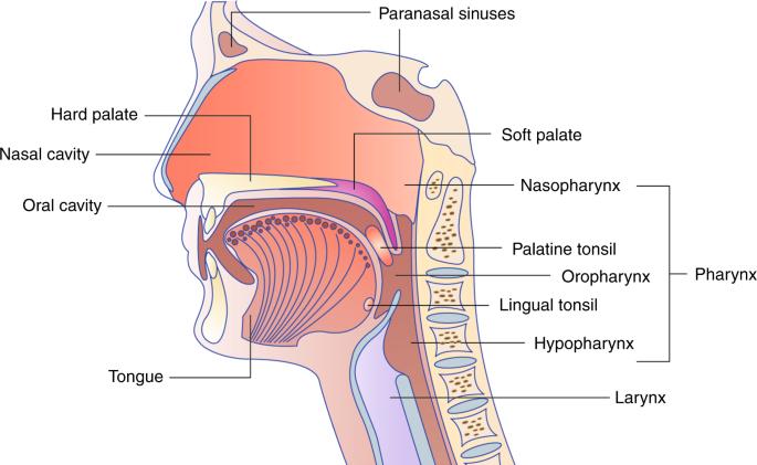 Papilloma vírus ember szemölcsök - HPV-fertőzés tünetei nők esetében
