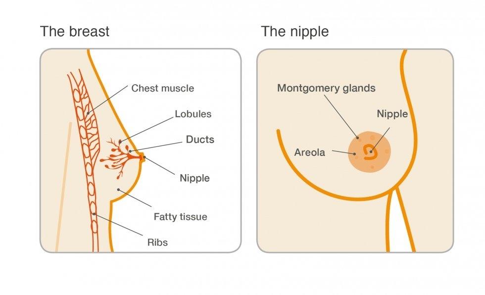 gyógyszerek kezelése férfiak condyloma esetén
