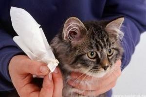 Bolhák és kullancsok a macskáknak és a kutyáknak - Akaromektin parazitaellenes gyógyszer spray 25ml