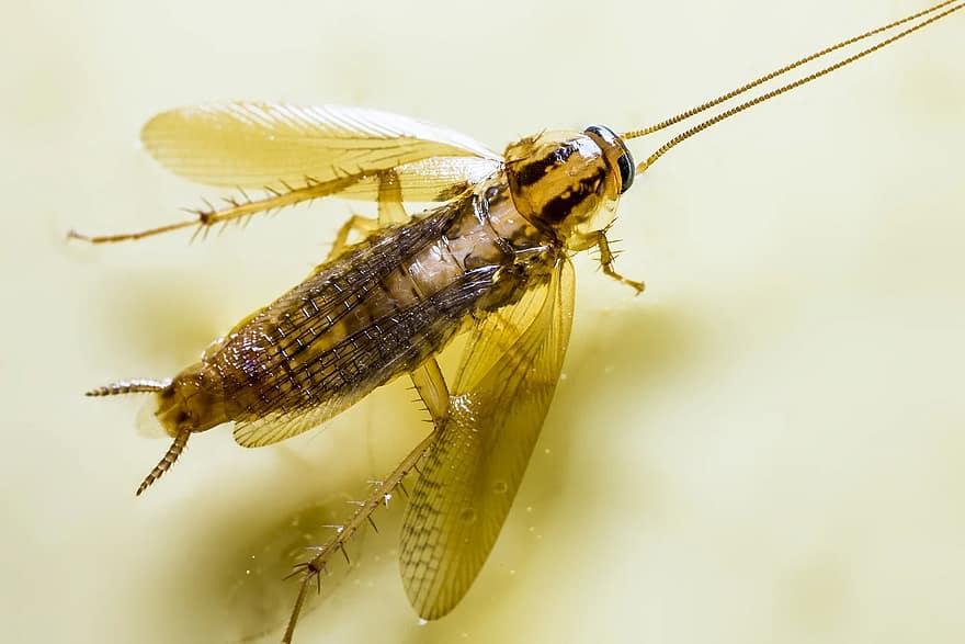 nem gyógyuló papilloma vírus