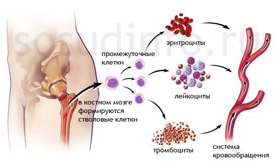 veleszületett dyserythropoietikus vérszegénység a prosztatarák tehetetlenné tesz